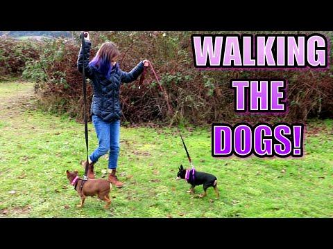WALKING THE DOGS AT THE ANIMAL SHELTER   NO POOP FILMING!   RADIOJH AUDREY VLOG