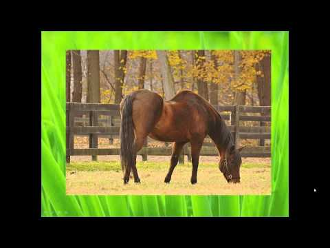 Online Hoof-Care Classrooms: Hoof Nutrition: Food For Thought