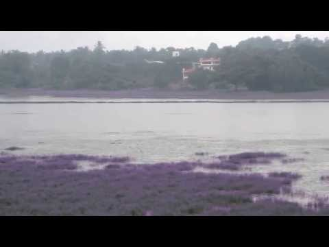 Carambolim Lake by Goa Tourism Travels