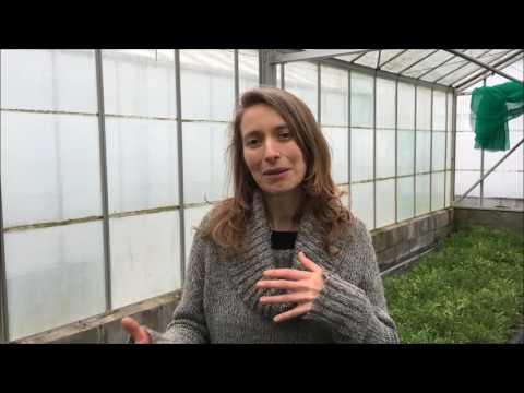 The Cardiff Salad Garden / Gardd Salad Caerdydd