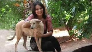Seema visits International Animal Rescue in Goa