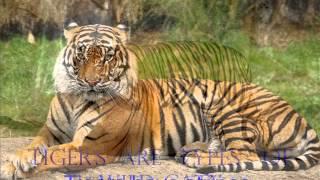 Elizabeth: Tiger Thumbnail