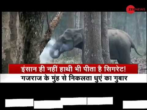 Watch: Viral video of elephant smoking in a forest