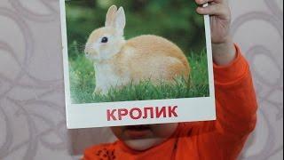 Знакомство с животными. Как говорят животные? | Развивающее видео для детей