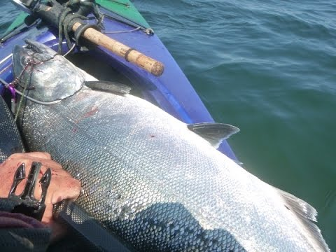 King Salmon by Kayak offshore NW Coast