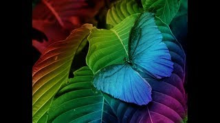 Make Rainbow Color In Image In Photoshop CS6 In Tamil