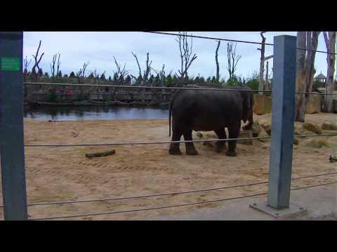 Elephant Feeding Time @ Twycross Zoo 11th October 2011