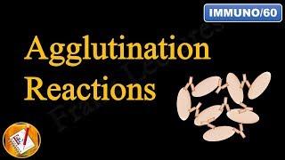 Agglutination Reactions (FL-Immuno/60)