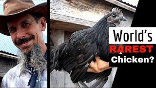 Raising the most EXPENSIVE CHICKEN on the PLANET