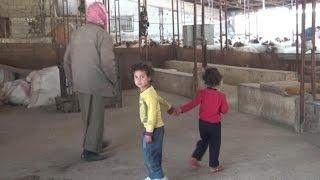 """بالفيديو.. سوريون اضطروا للعيش مع """"الماشية"""": الرائحة تذبح أطفالنا"""