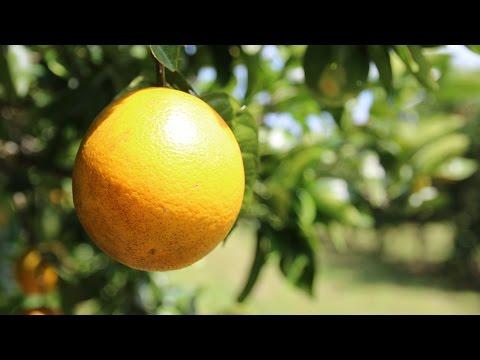 GEPA: Von der Orange bis zum Saft fair und unverwechselbar