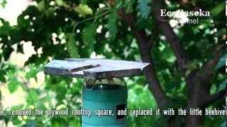 Пчеловодство малых форм | Toy-Scale Beekeeping