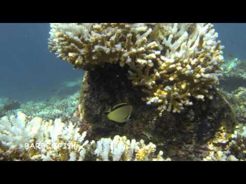 monica losey   Panama Underwater for HUPS