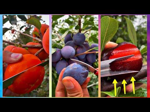 😍Farm Fresh Ninja Fruit Cutting (Oddly Satisfying Fruit Ninja) #01