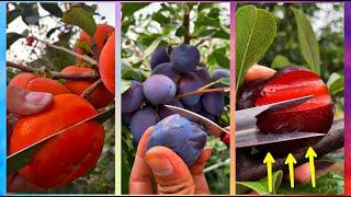 😍Farm Fresh Ninja Frขit Cutting (Oddly Satisfying Fruit Ninja) #01