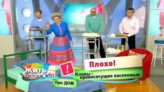 видео уничтожение клопов в москве