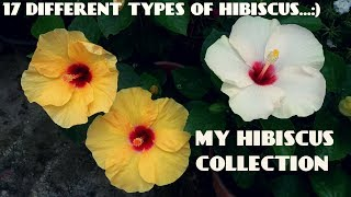 17 Different Types of Hibiscus Flowers in My Garden
