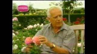 Дэвид Остин рассказывает о своих розах.