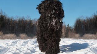 Русский чёрный терьер на World Dog Show 2016