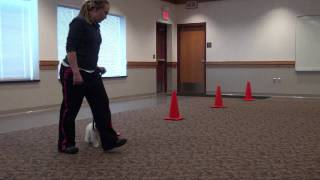 Kajsa (jack Russell Terrier) Boot Camp Obedience Training Mn