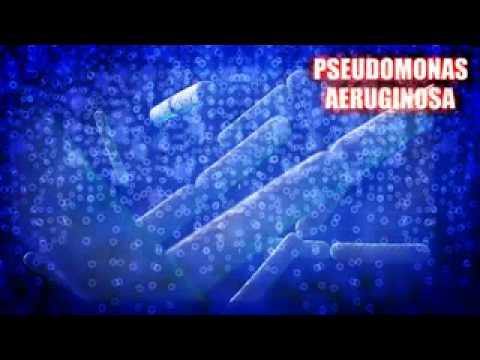 Pseudomonas Aeruginosa Symptoms & Treatment