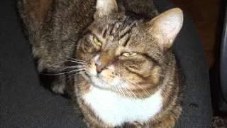 Коты помирились. Домашние фото. Прикольные полосатые котики.