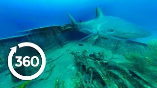 MythBusters: Sharks Everywhere! (360 Video)