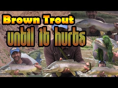 Dry Fly Fishing for Brown Trout - Hook'em Until it Hurts - Big Browns with Troutster