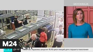 Смотреть видео В Шереметьево отстранили сотрудника из-за пистолета на борту самолета - Москва 24 онлайн