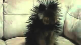 позитивное видео  смешное видео  смешнее смешного видео  юмор  видео про животных  видео приколы