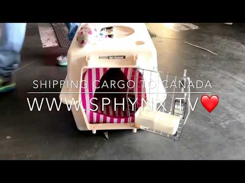 Shipping CARGO Madrid-Montreal www.Sphynx.Tv