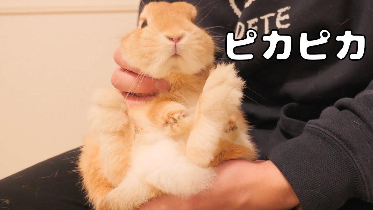 足裏が汚れたウサギを綺麗にお掃除したらこうなりました【No.551】