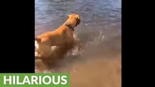 Dog doesn't fully comprehend concept of swimming