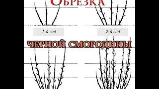 видео Смородиновый веник