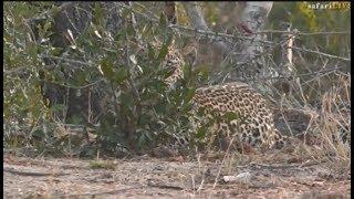 Pt 1 Safari Live's Sunrise Safari Drive at 5:30 AM on Oct 04,2017 ( Hosana ) thumbnail