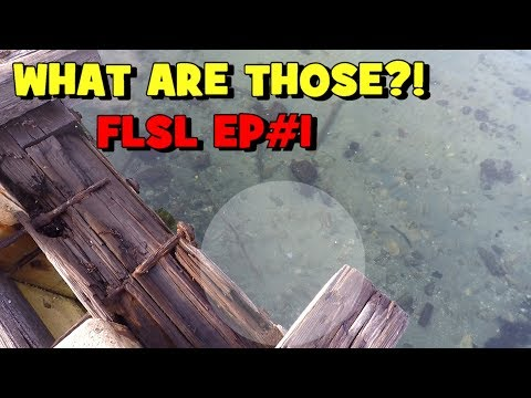 What WERE THOSE...?! The FLORIDA SPECIES SLAM Begins!!! FLSP EP1