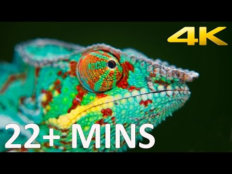 Sony 4K Demo 2013 (22+ minutes)