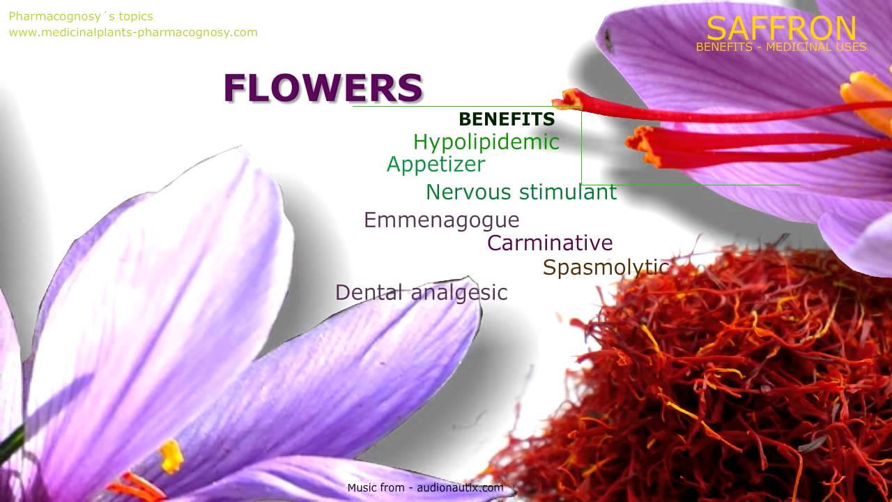 saffron benefits. properties as a medicinal plant - youtube