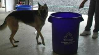 K9 Basics Recycles!