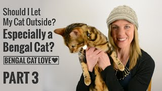 Should I Let My Cat Outside? Especially a Bengal? PART 3