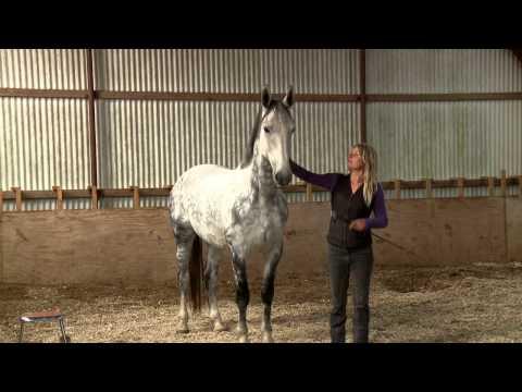 Mia Lykke Nielsen trains Dutch show jumper. When Horses Choose. Mia Lykke Nielsen.