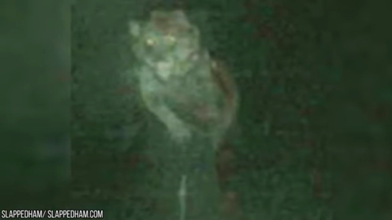 Download 10 TERRIFYING Werewolves Caught On Camera!