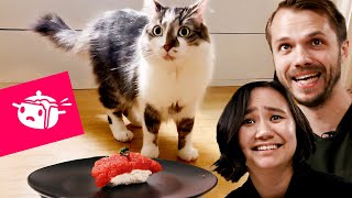 We Tried To Make Sushi For Our Cats • Tasty