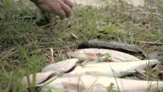 видео «Браславские озера» - национальный парк. «Браславские озера»: базы отдыха, санаторий, рыбалка. Фото и отзывы