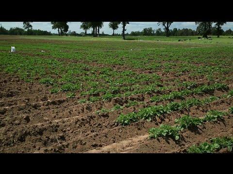 Ministerio De Agricultura Chile