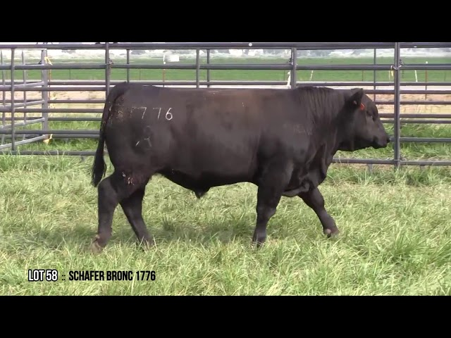 Mid Valley Bull Sale Lot 58