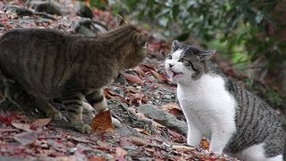 Бешенство у кошек. Чем опасно бешенство. Источники бешенства