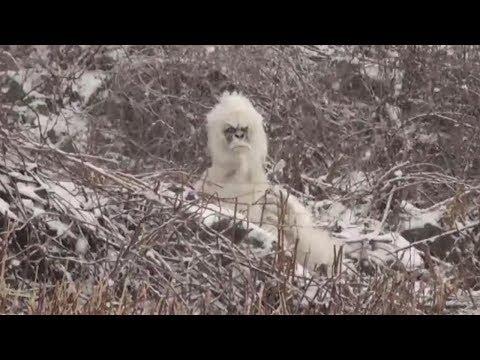 Sasquatch Yeti Prank In The Mountains
