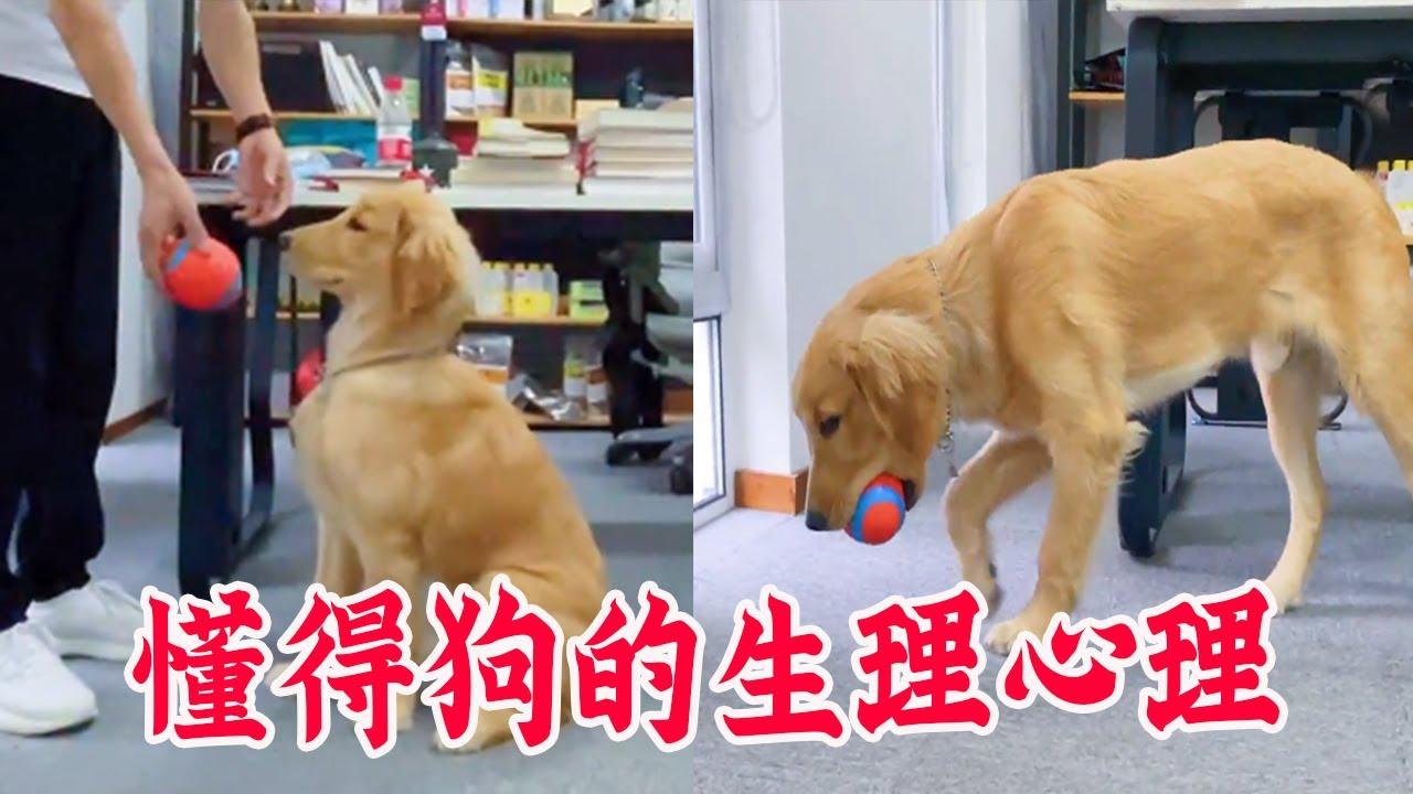 教狗规则,是为了让他在城市里过上更好的生活,享有更多自由【犬道APP】
