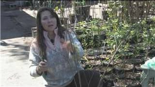 Fruit Trees : How to Prune Pomegranate Trees